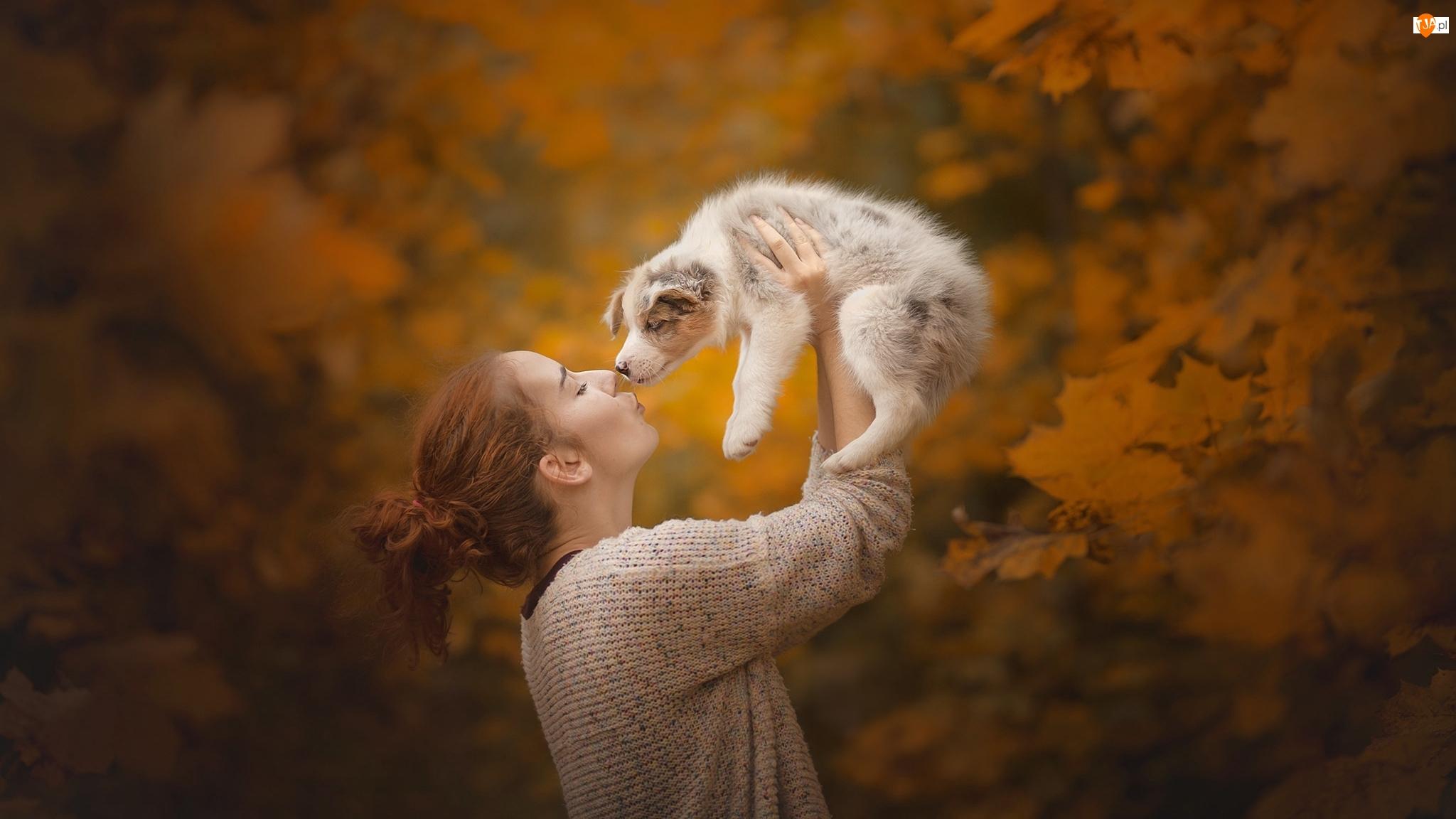 Szczeniak Border collie, Kobieta, Pies