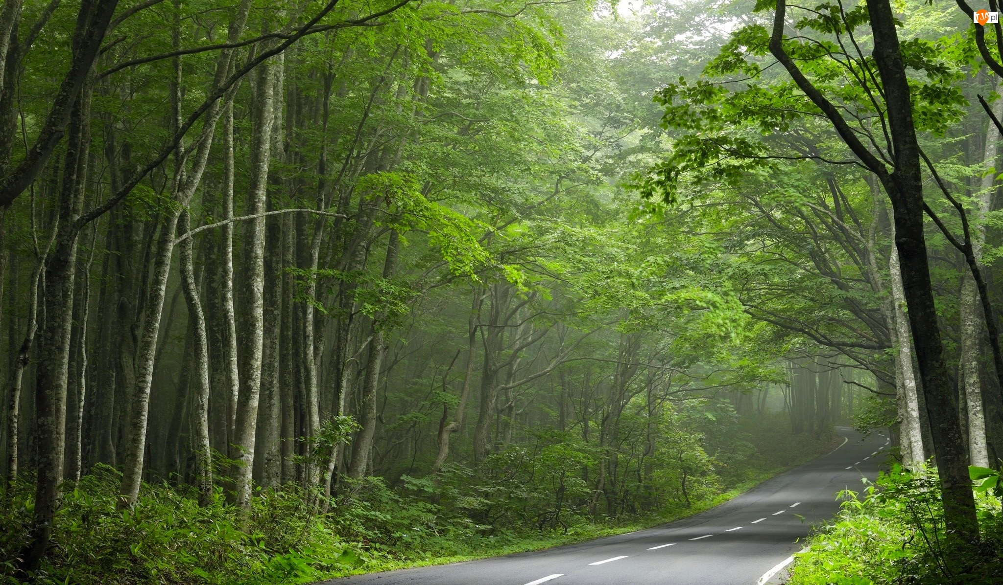 Droga, Drzewa, Asfaltowa, Las