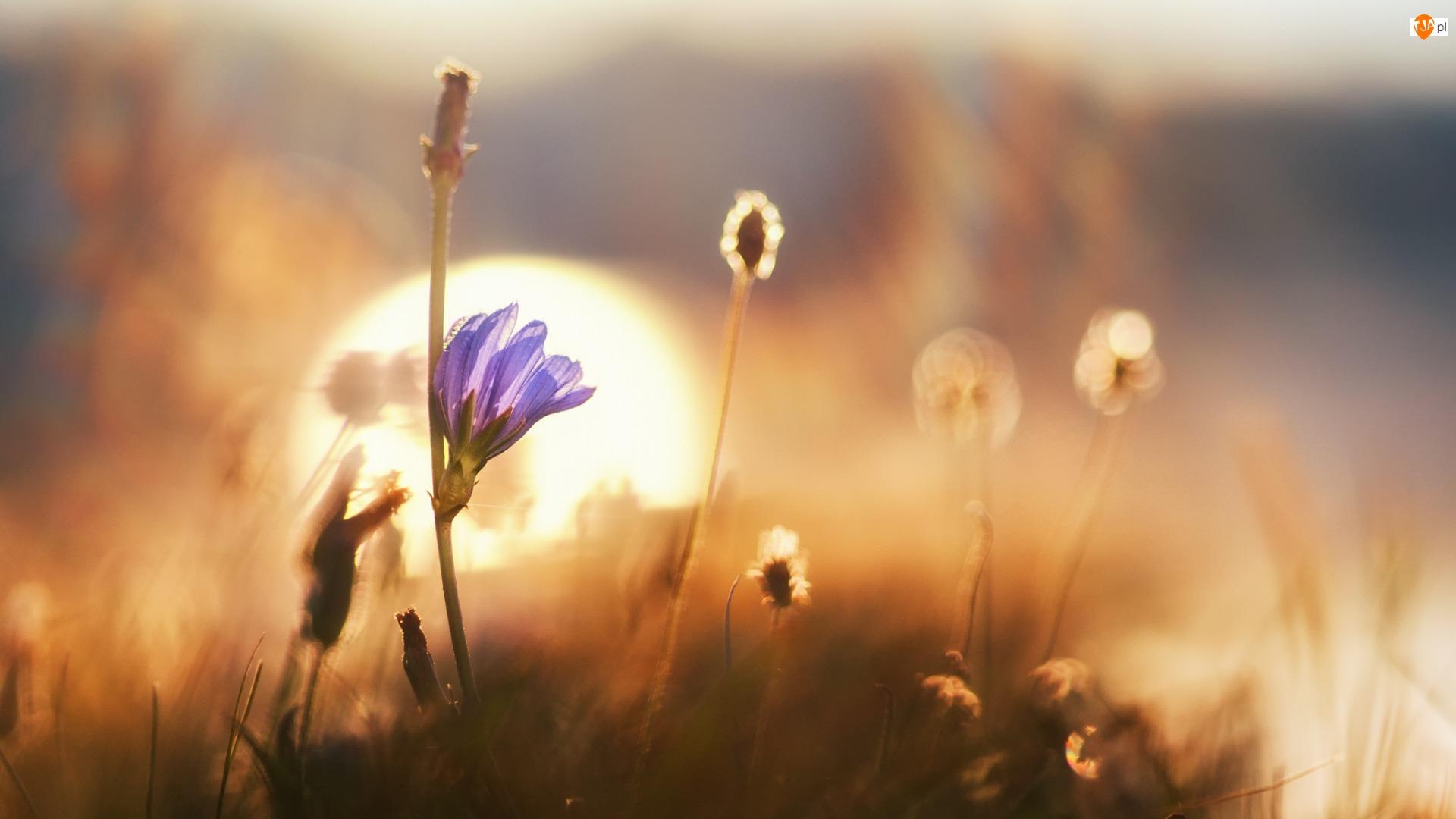Zbliżenie, Tło, Rośliny, Światło, Kwiat, Rozmyte