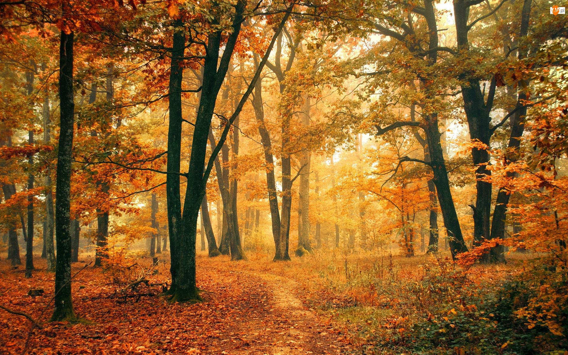 Jesień, Roślinność, Las, Drzewa