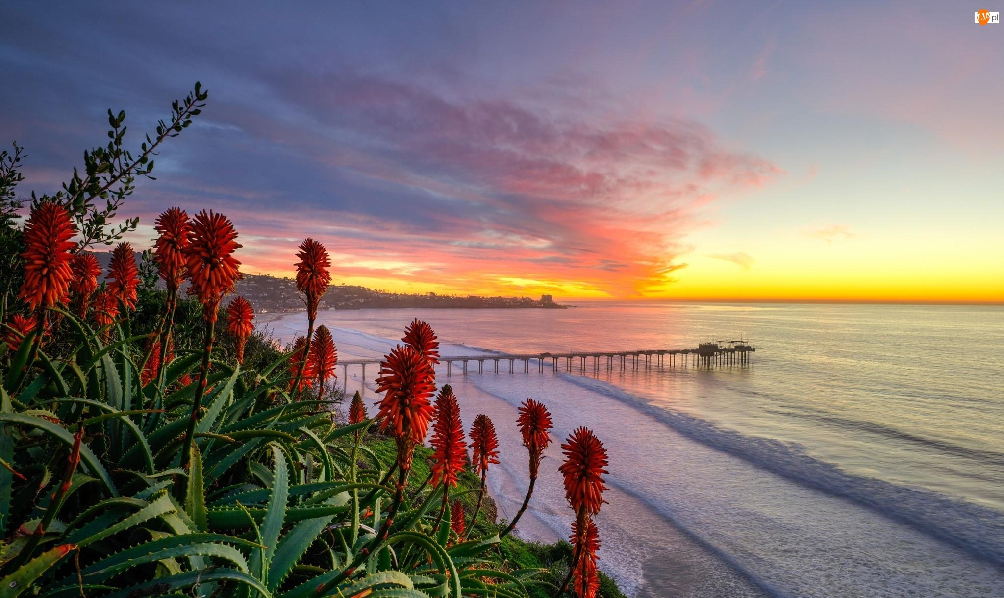 Chmury, Wybrzeże, Wschód słońca, Kalifornia, Morze, Stany Zjednoczone, Aloes, San Diego, Molo