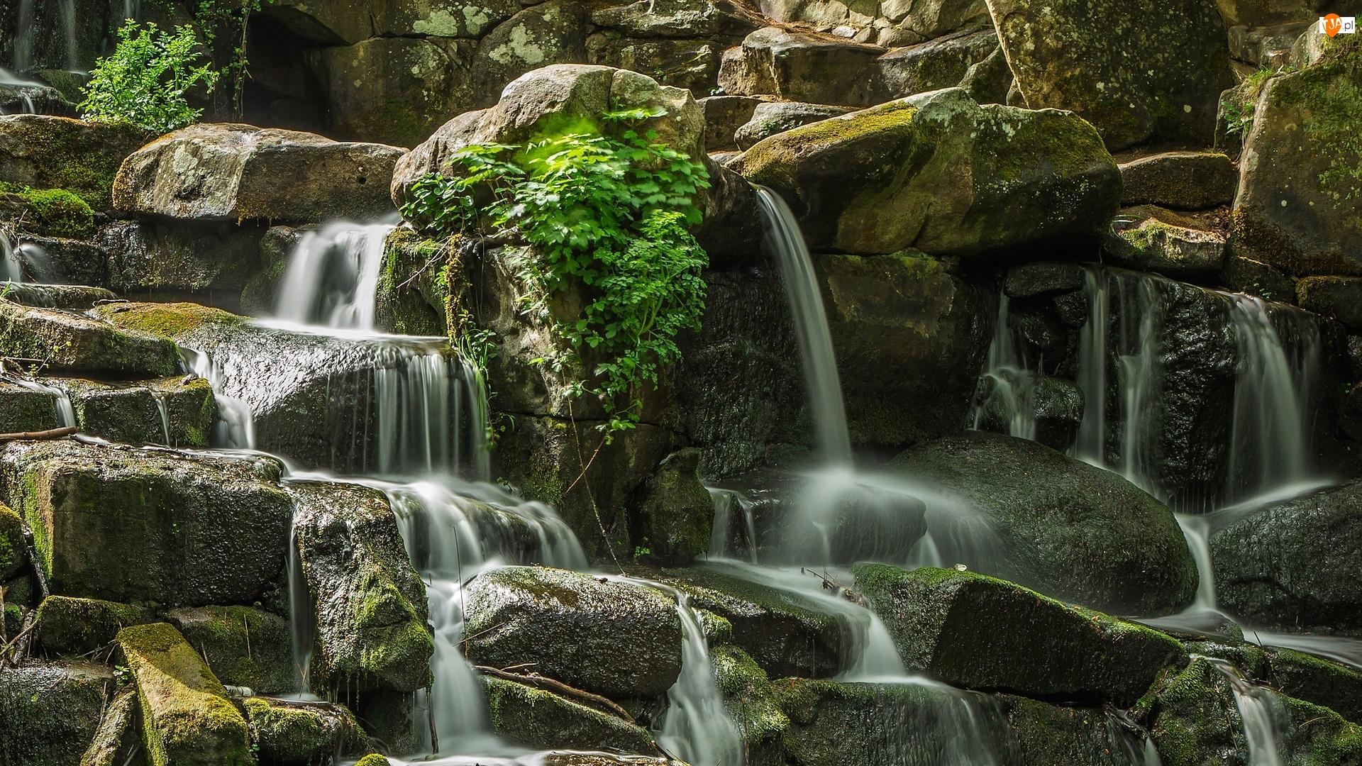 Woda, Rośliny, Omszałe, Kamienie