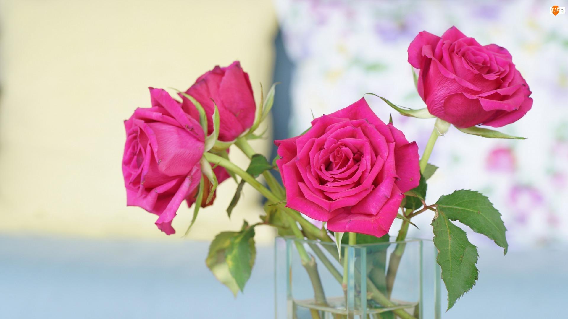 Rozmyte, Szklany, Różowe, Cztery, Tło, Róże, Wazon
