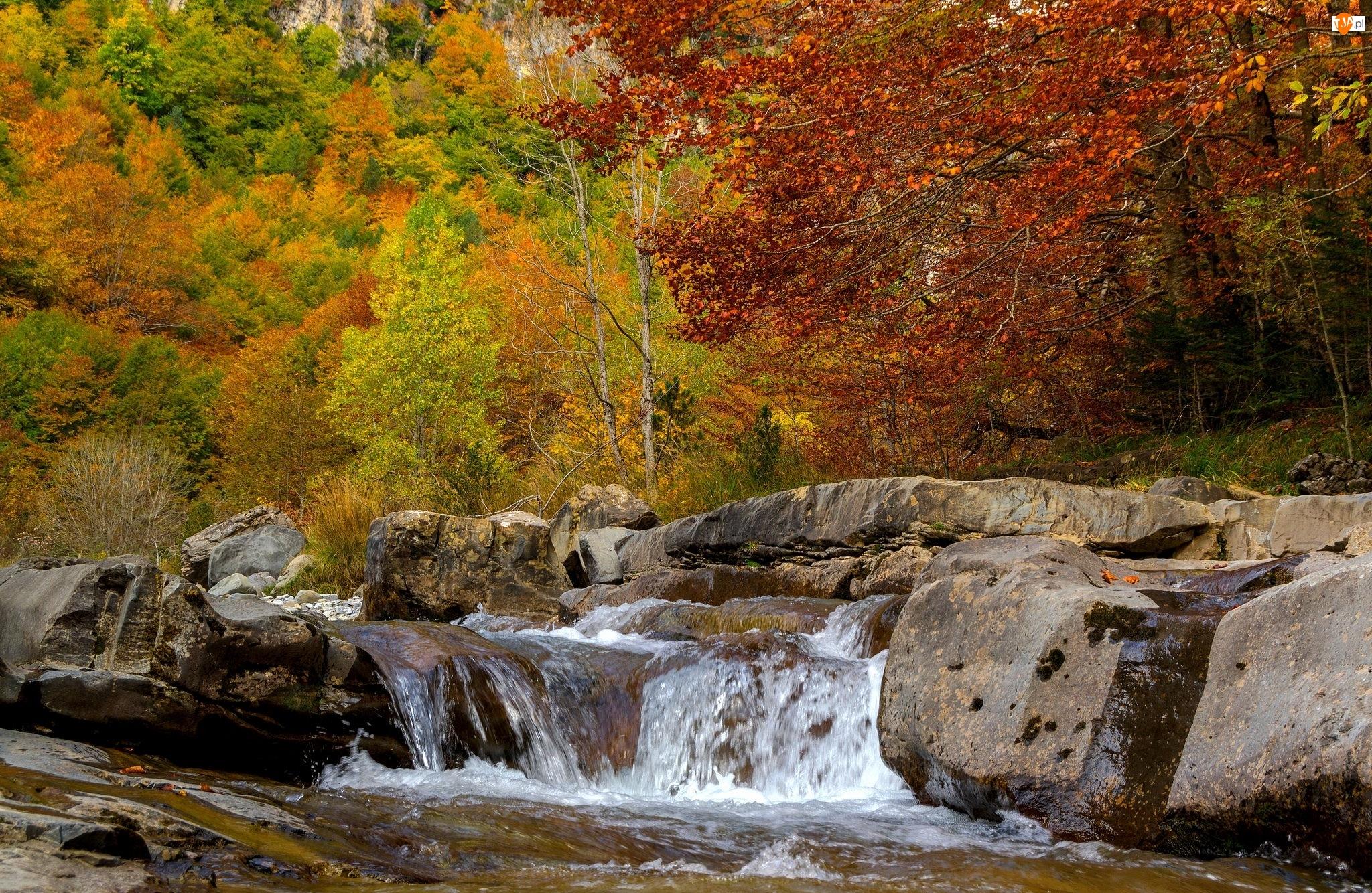 Drzewa, Jesień, Las, Kamienie, Rzeka