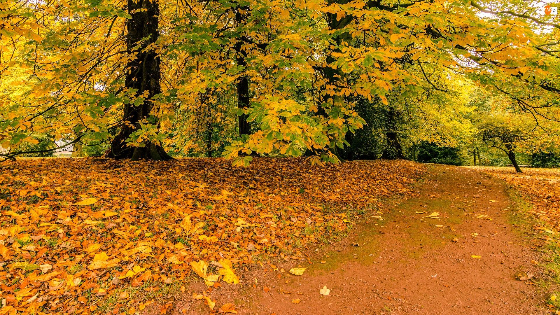 Liście, Jesień, Drzewa, Park, Droga