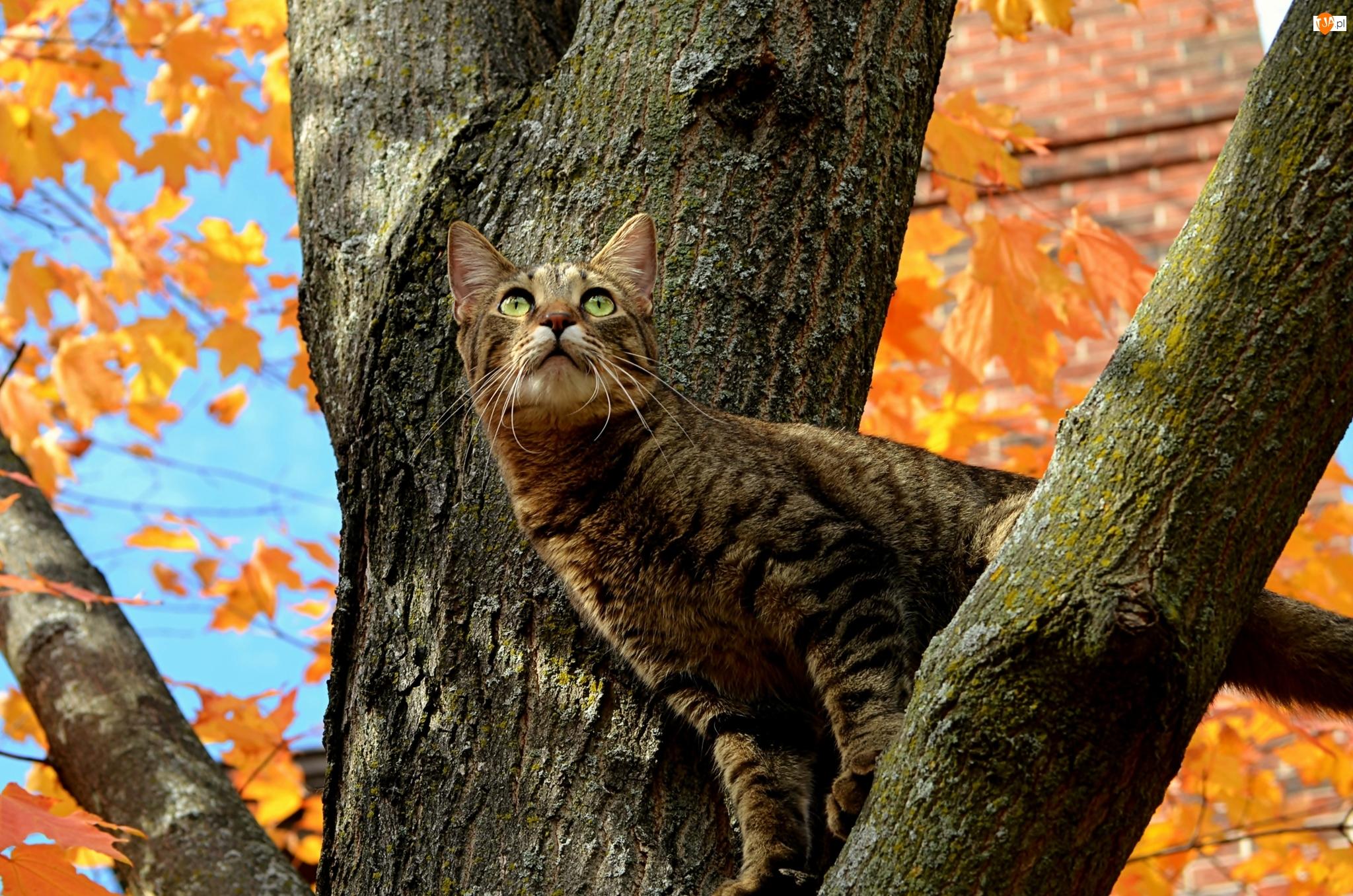 Bury, Konary, Kot, Drzewo