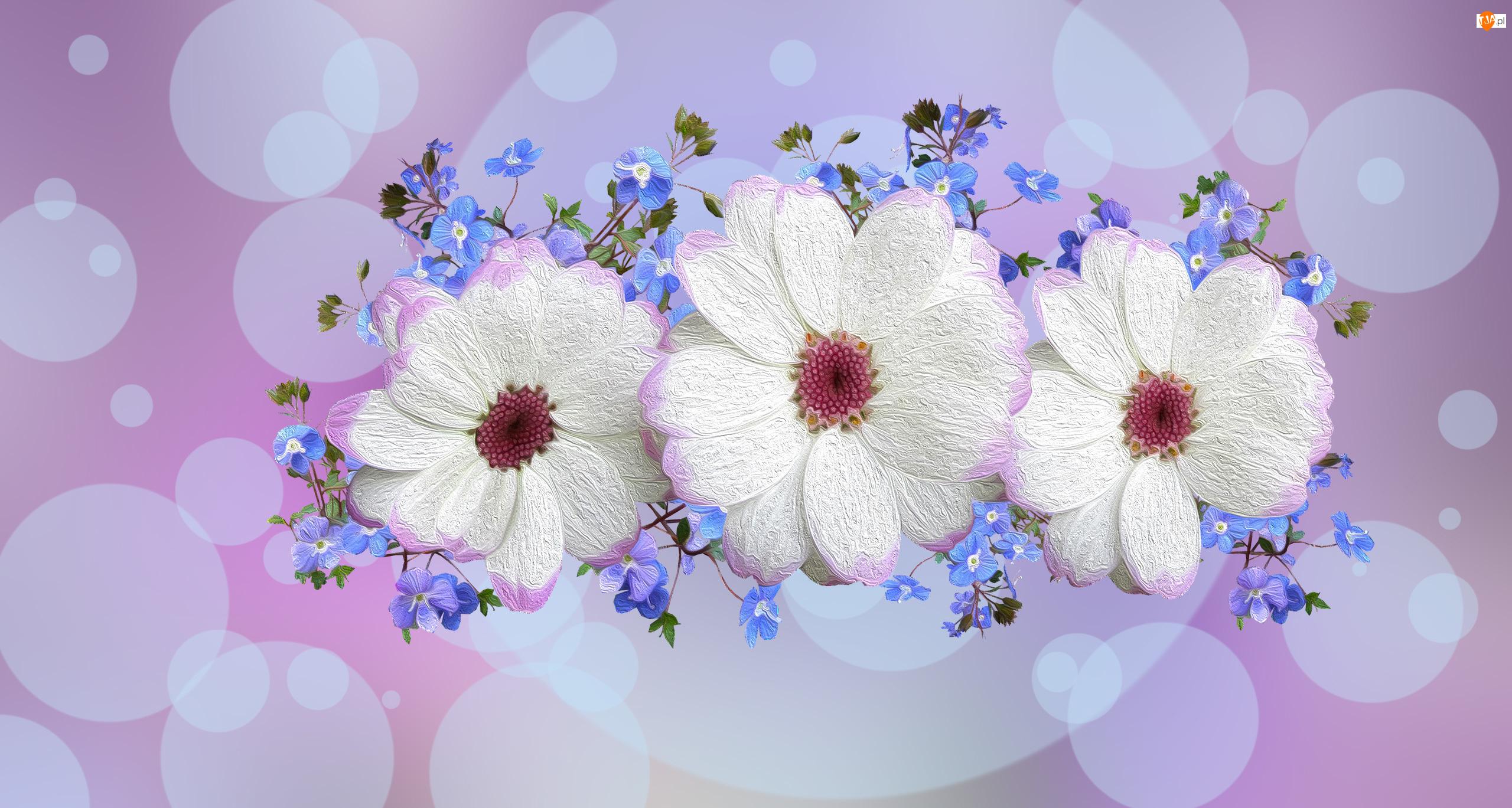 Białe, 2D, Niebieskie, Kwiaty