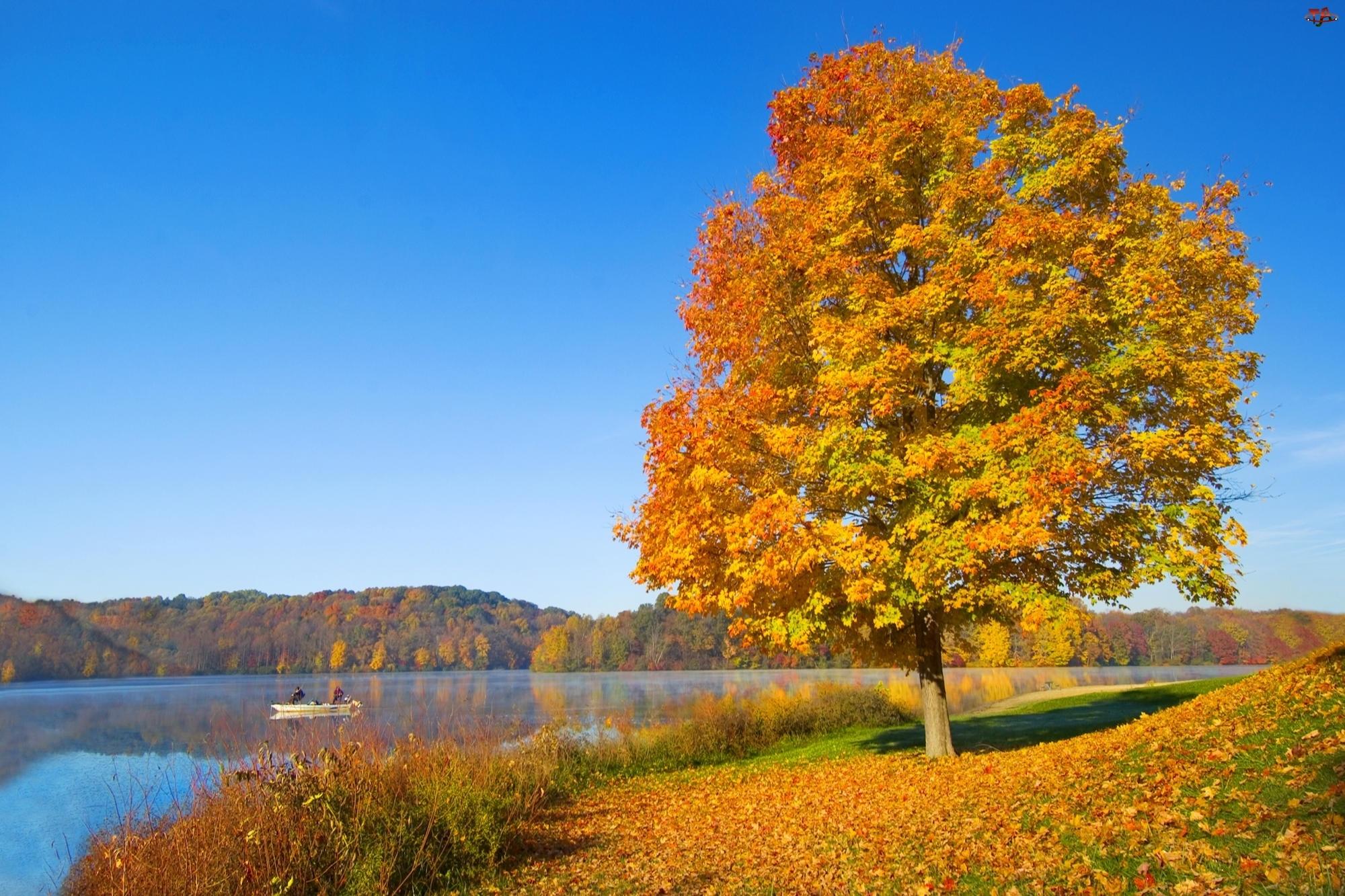 Jesień, Liście, Drzewo, Jezioro