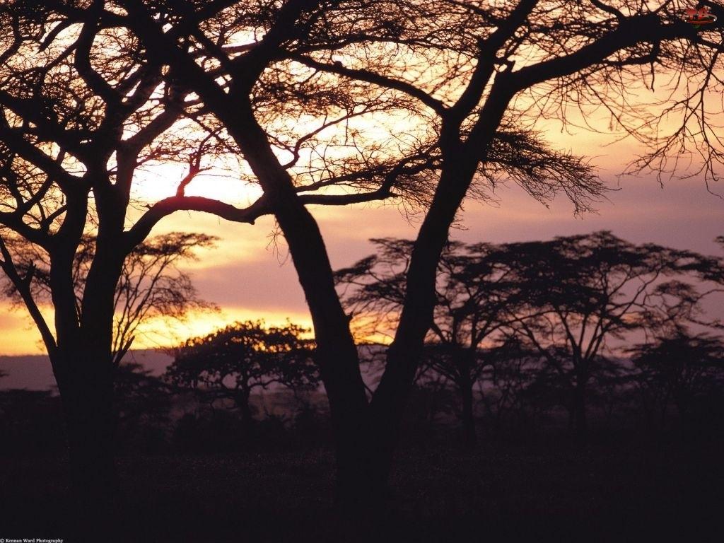 Afryka, Drzewa