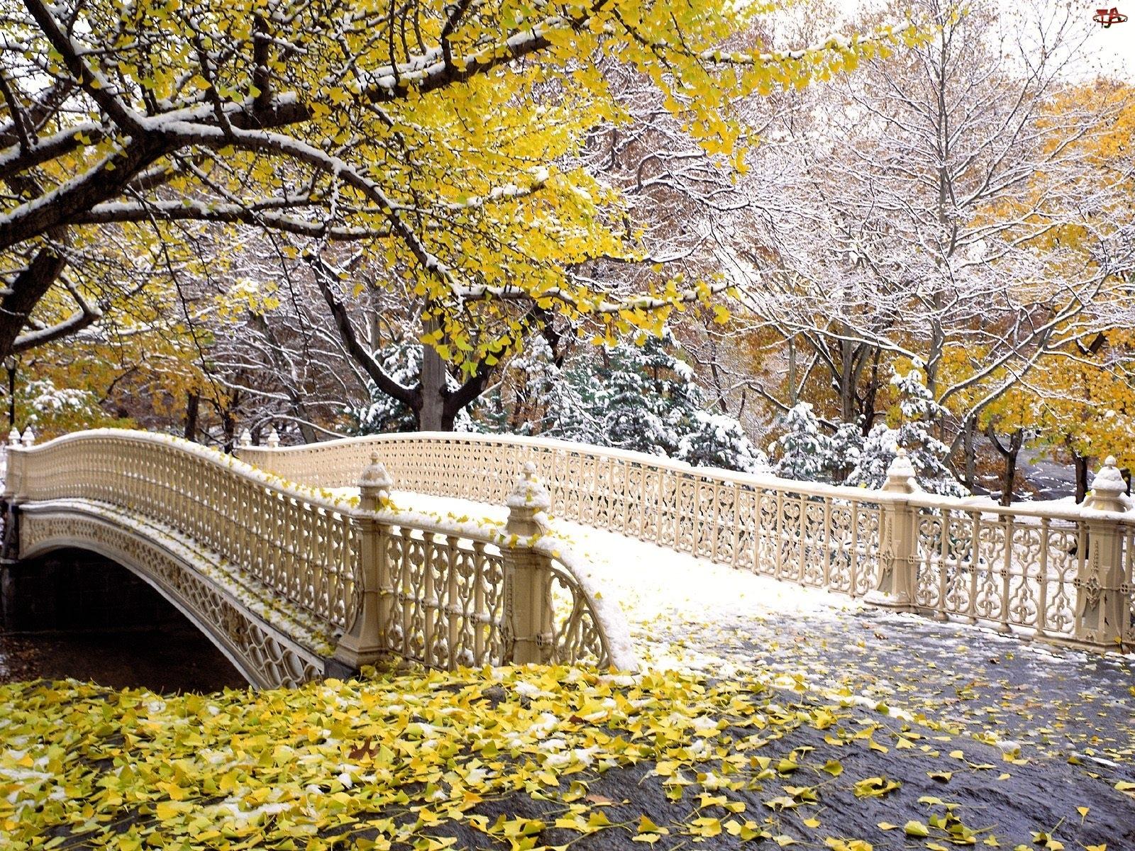 Jesień, Central Park, Nowy York