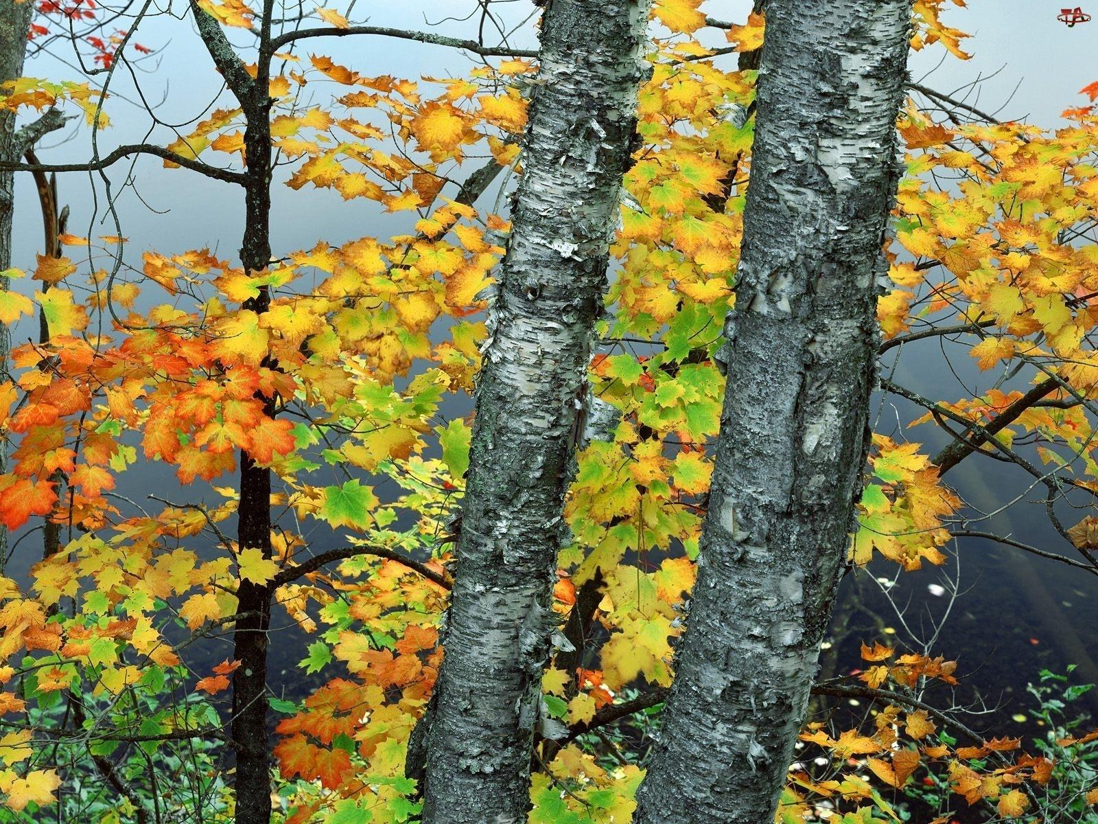 Zielono, Drzew, Żółte, Liście
