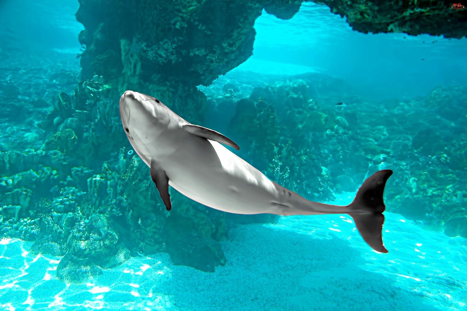 Oceanu, Delfin, Błękit