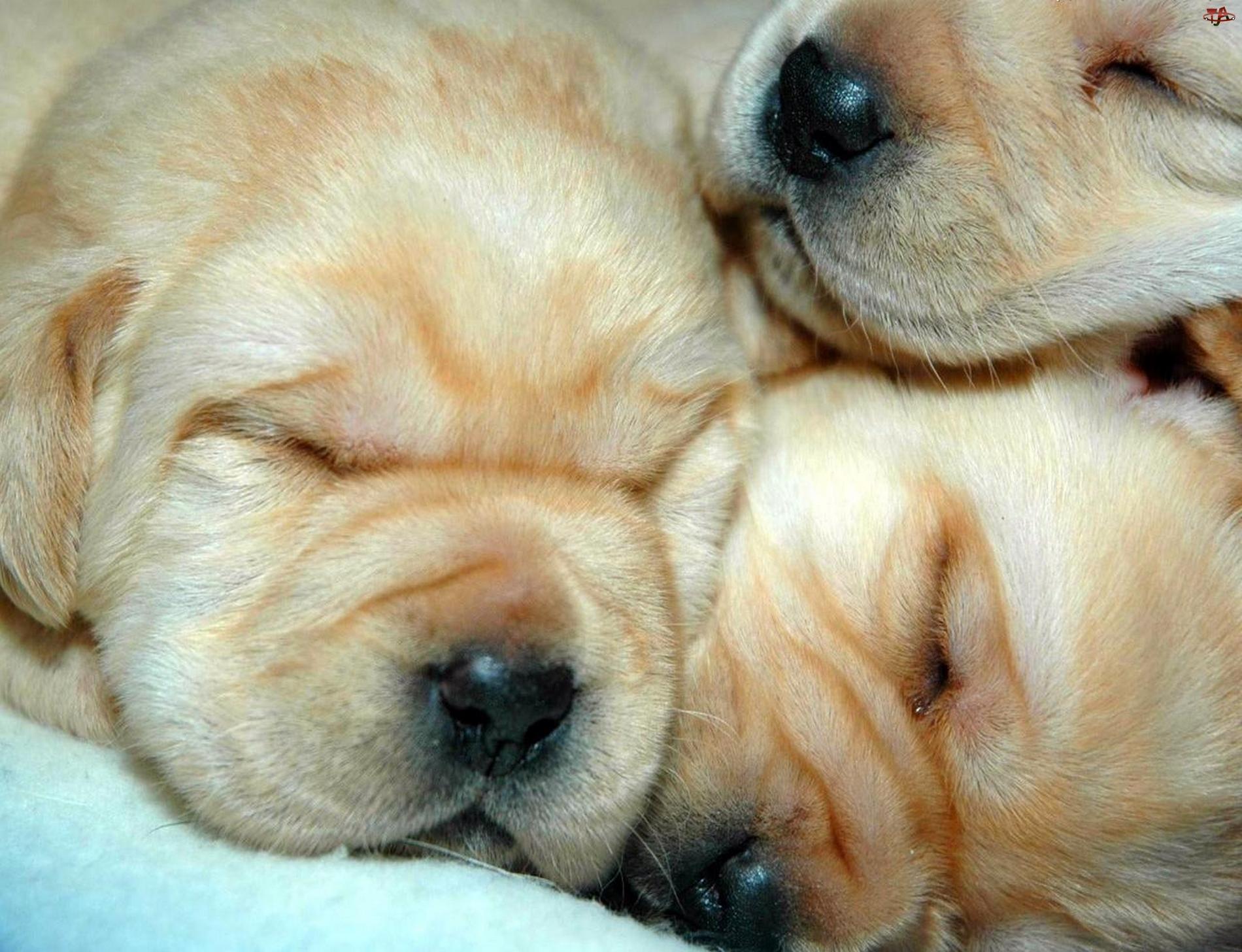 Сладко спит а брат 21 фотография