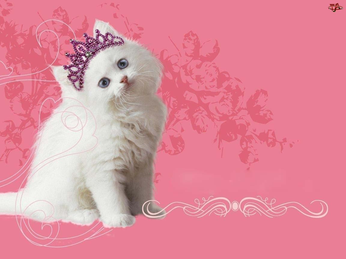 Diadem, Kot, Księżniczka