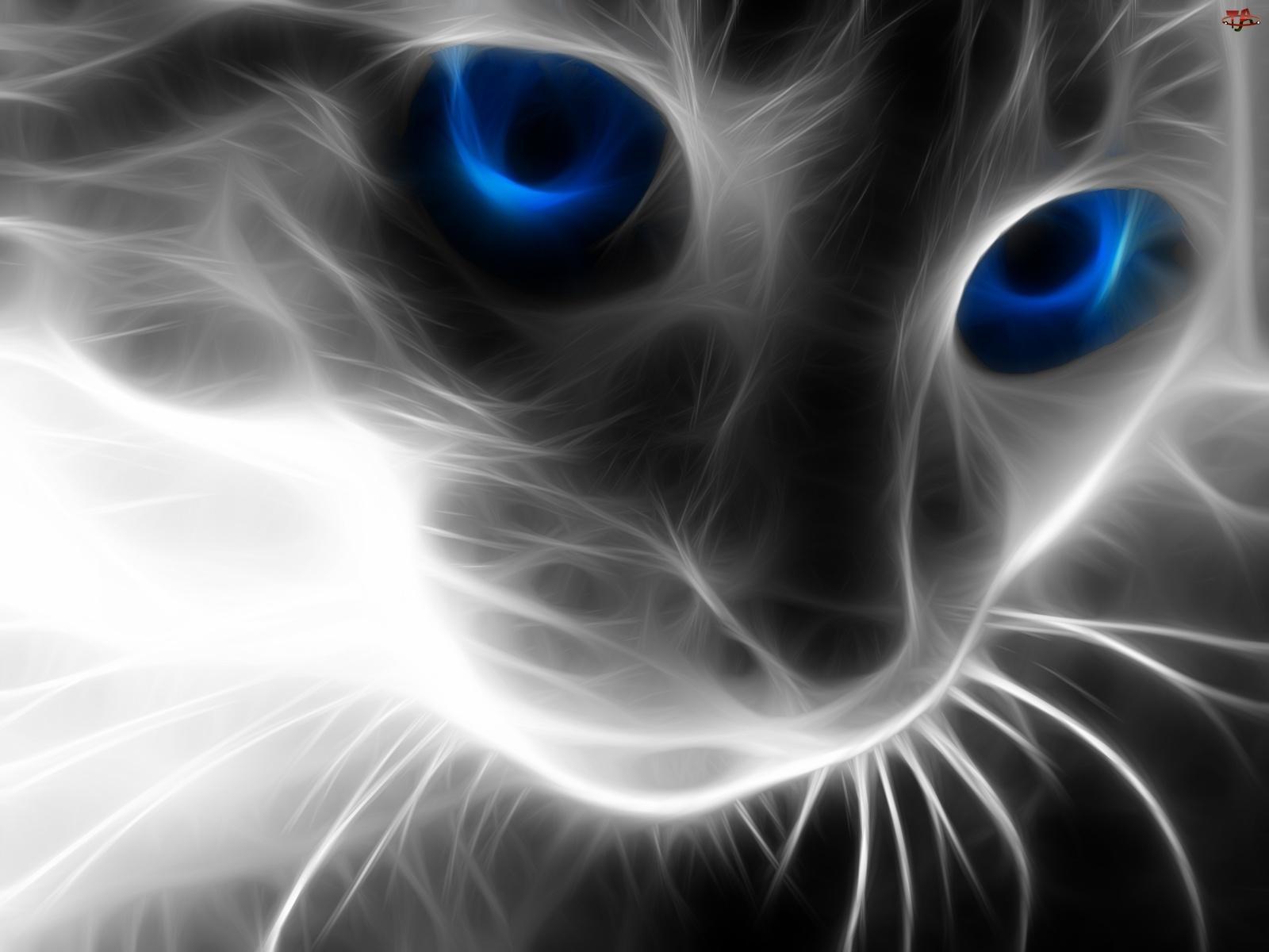 3D, Kot, Niebieskie, Sierść, Oczy