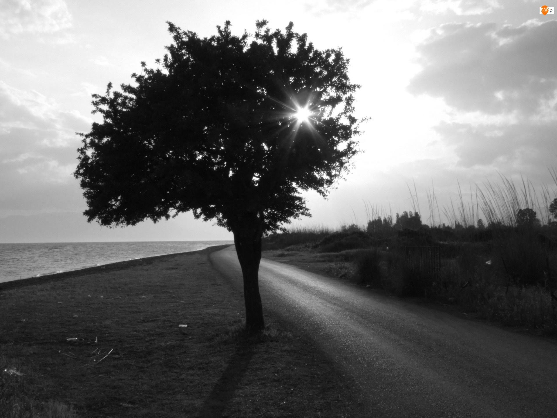 Drzewo, Droga, Promienie, Słońca