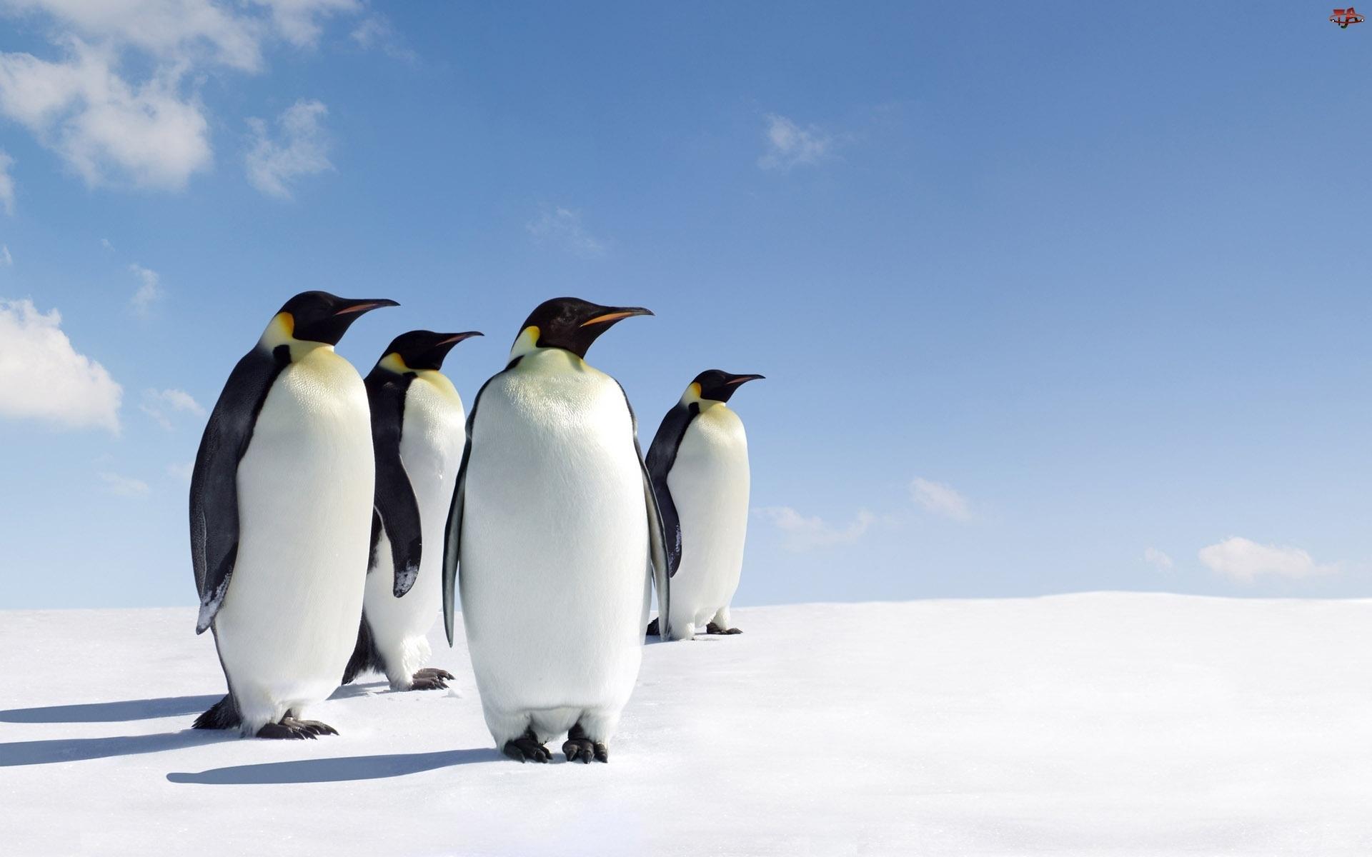 Śnieg, Pingwiny, Niebo