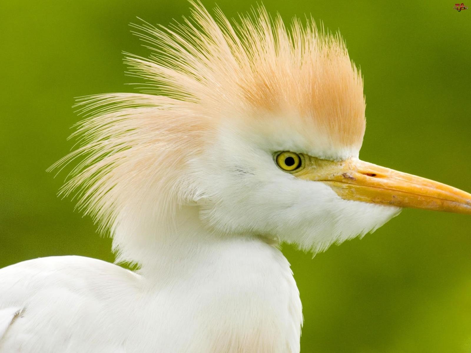 Ptak, Biały, Egzotyczny