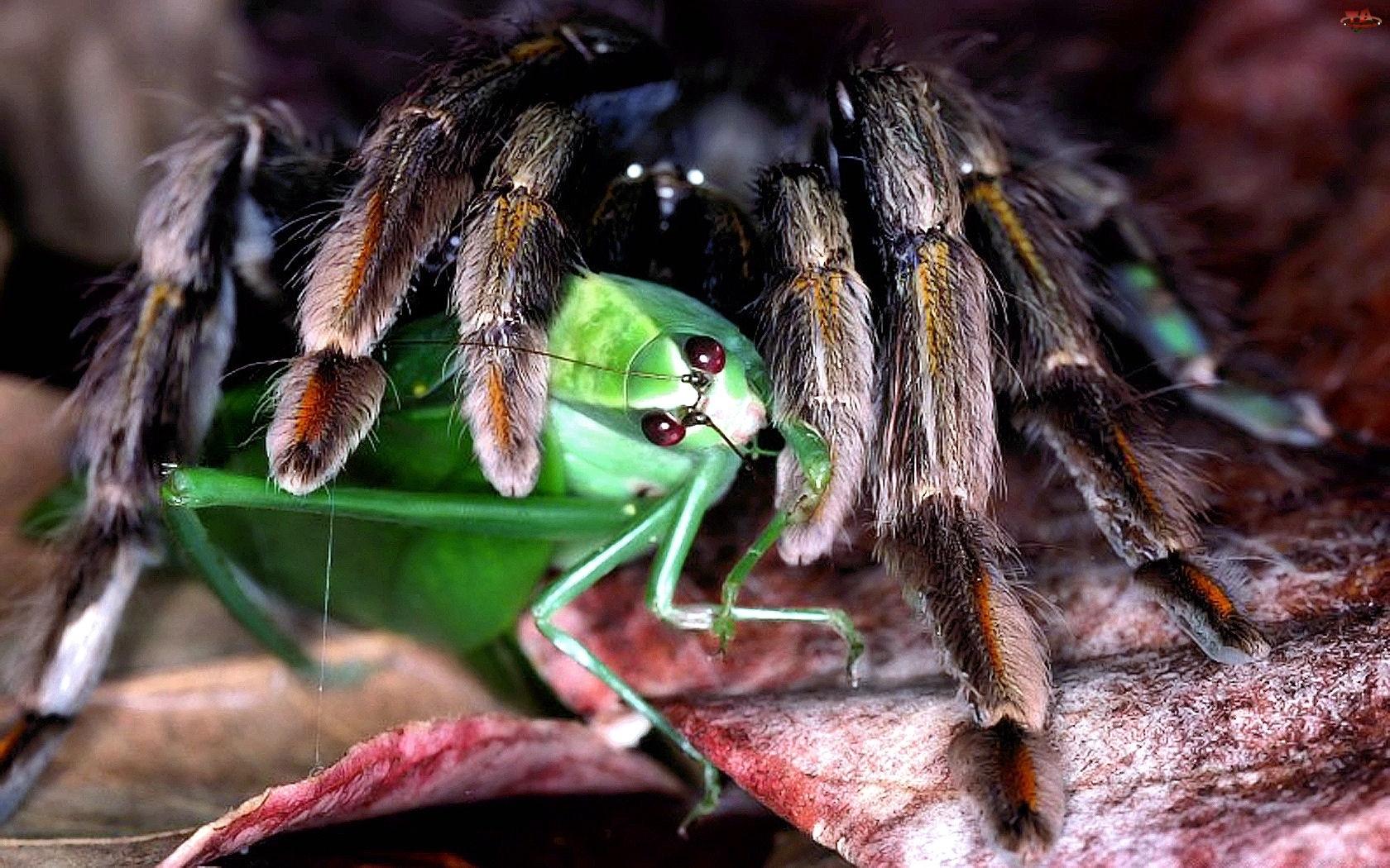 Животные и насекомые картинки 4