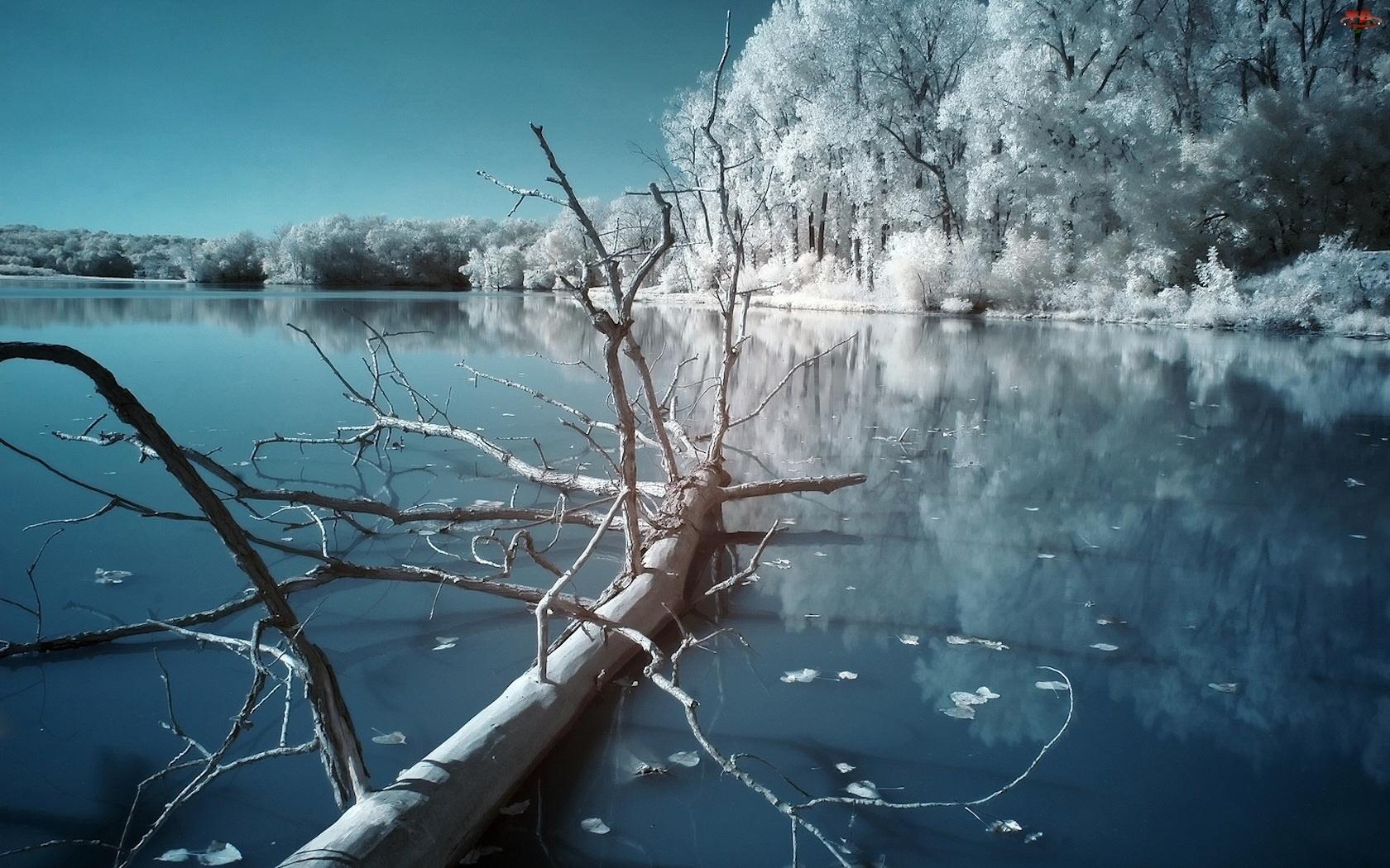 Zima, Drzewo, Jezioro, Powalone