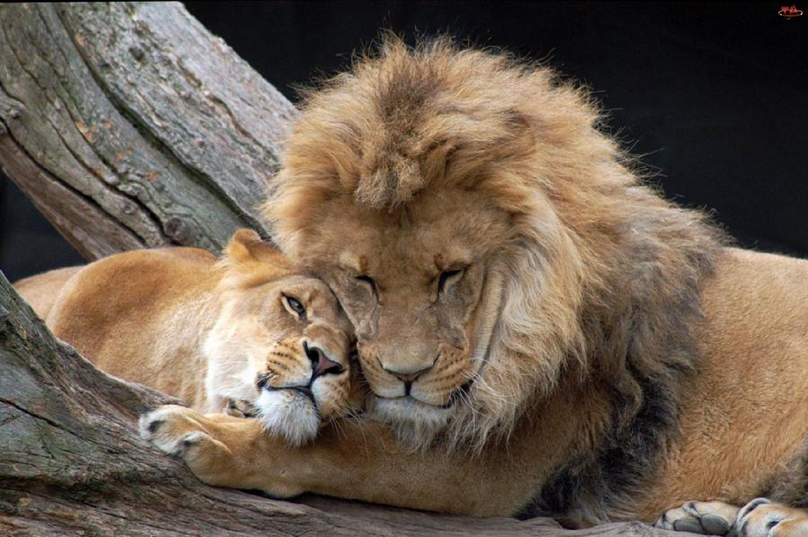 Звери про любовь фото 5