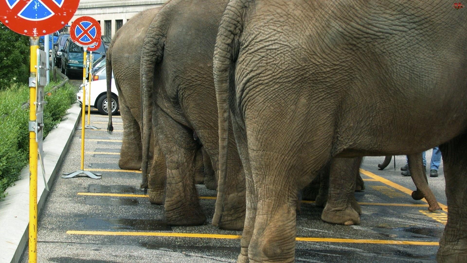 Słonie, Parking
