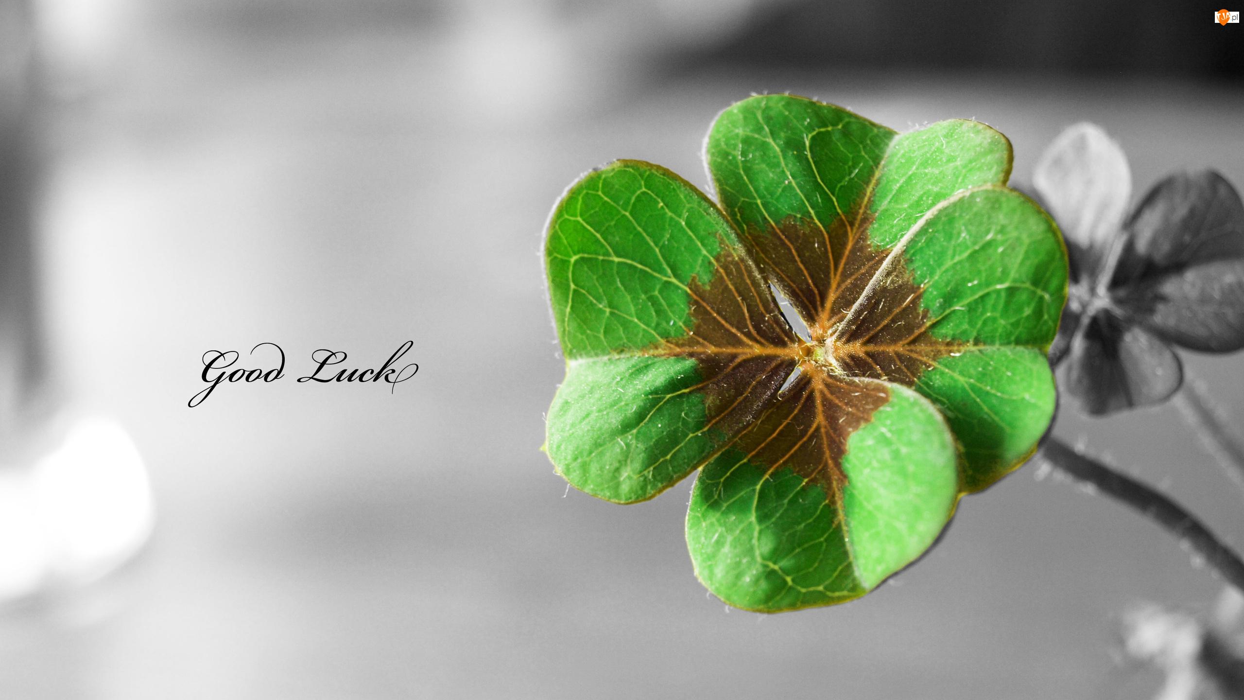 szczęście,good luck, szczęśliwe życie, człowiek