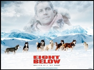 psy, Paul Walker, góry, Eight Below