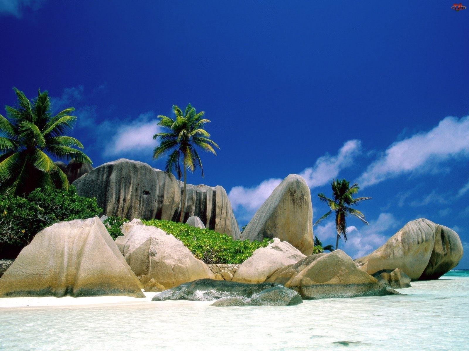 Niebo, Plaża, Palmy, Skały, Niebieskie