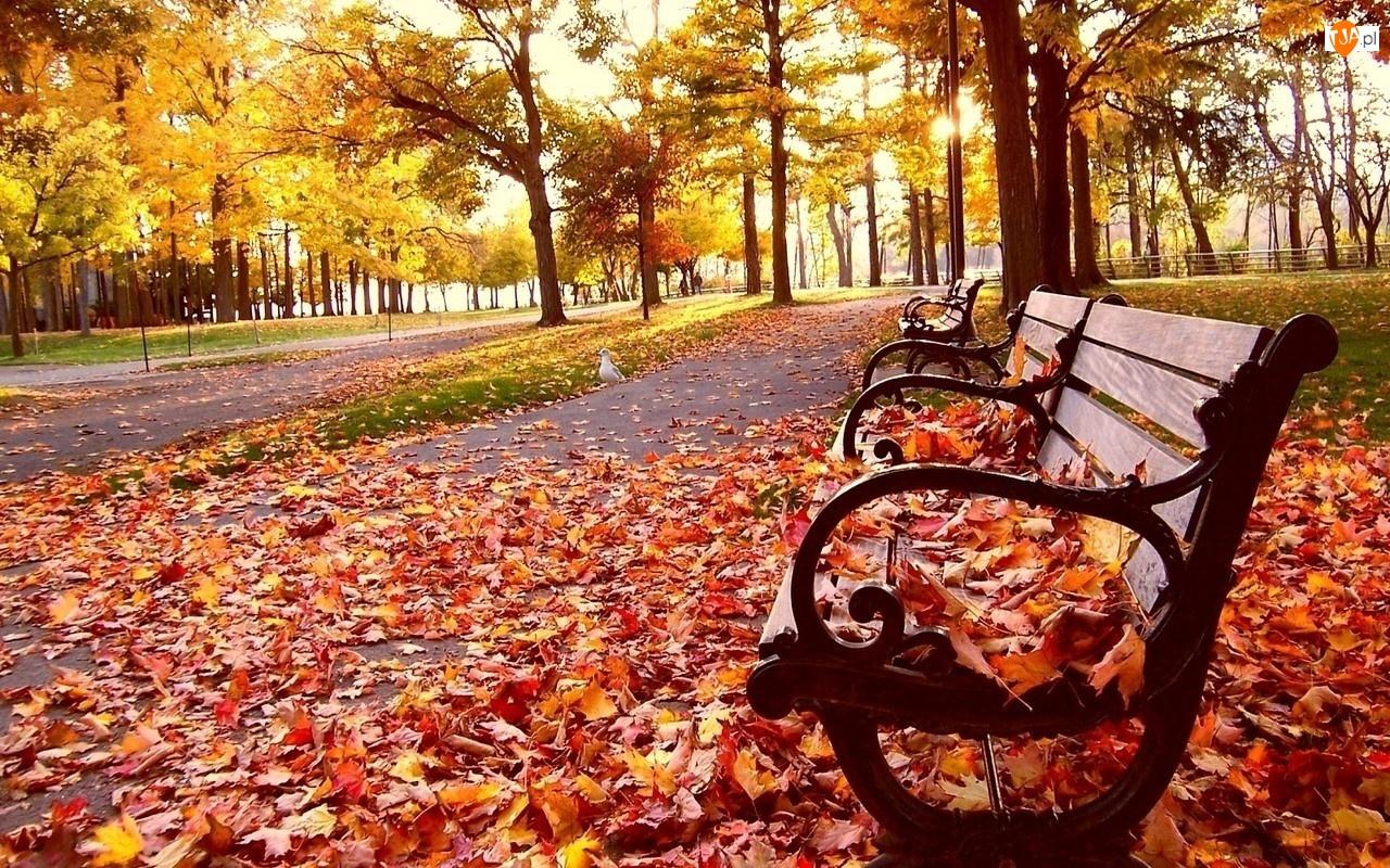 Jesień, Ławeczka, Liście, Park