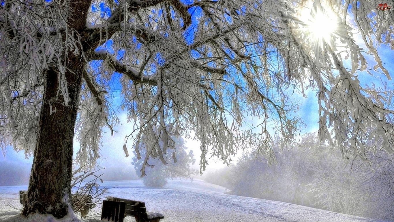 Zima, Słońce, Drzewo, Ławka