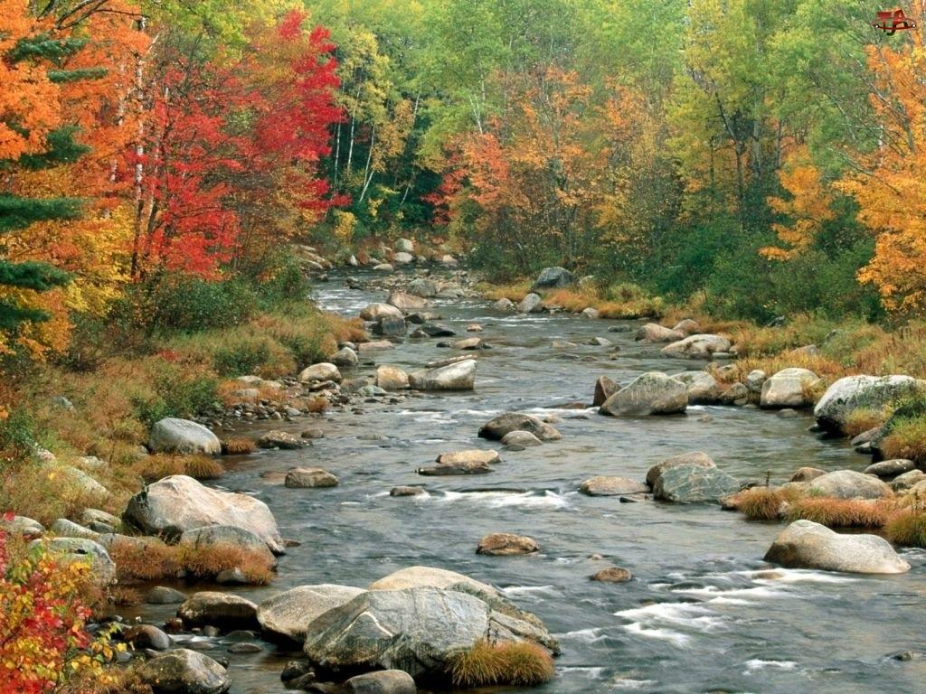 Jesień, Las, Rzeka, Kamienie