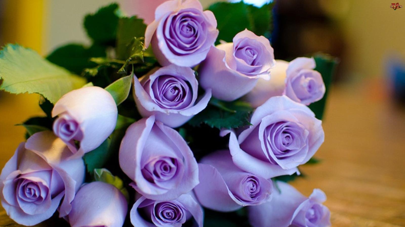 Róż, Wiązanka, Fioletowych