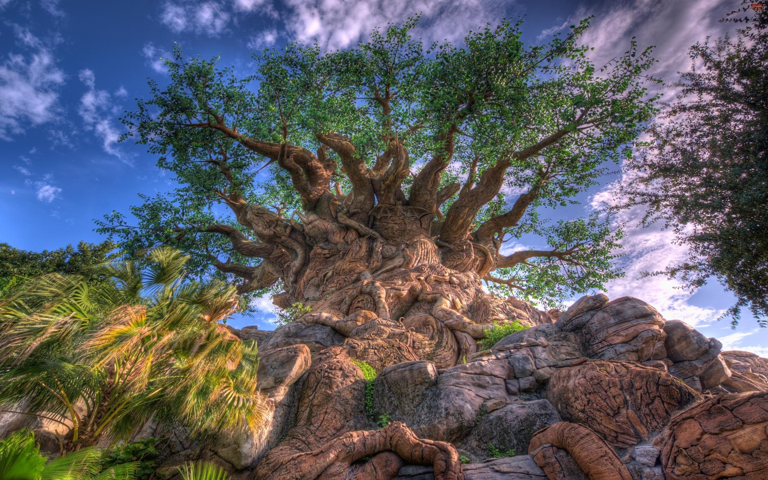 Korzenie, Duże, Drzewo