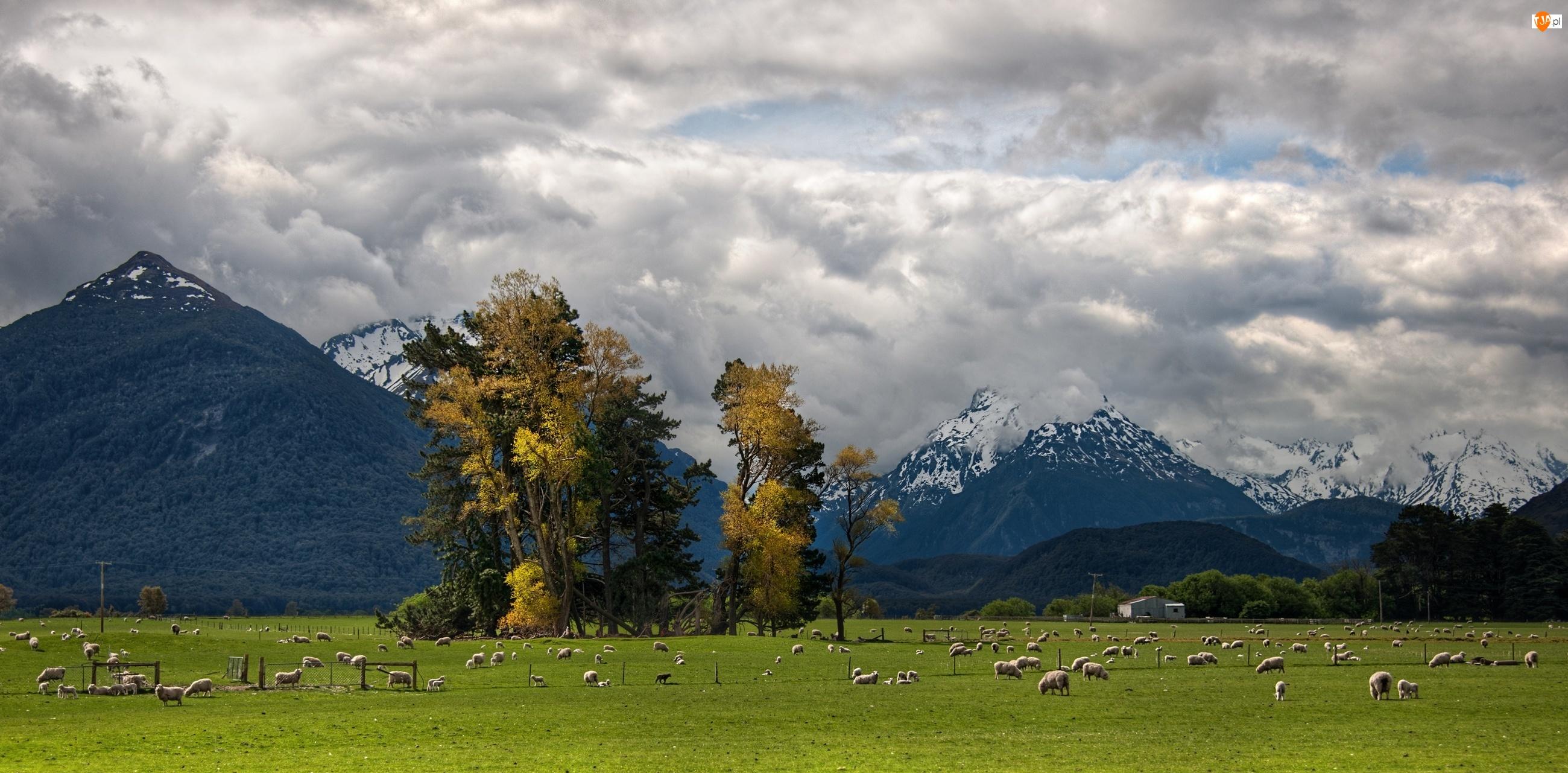 Góry, Nowa Zelandia, Pastwisko, Trey Ratcliff, Owce, Glenarchy