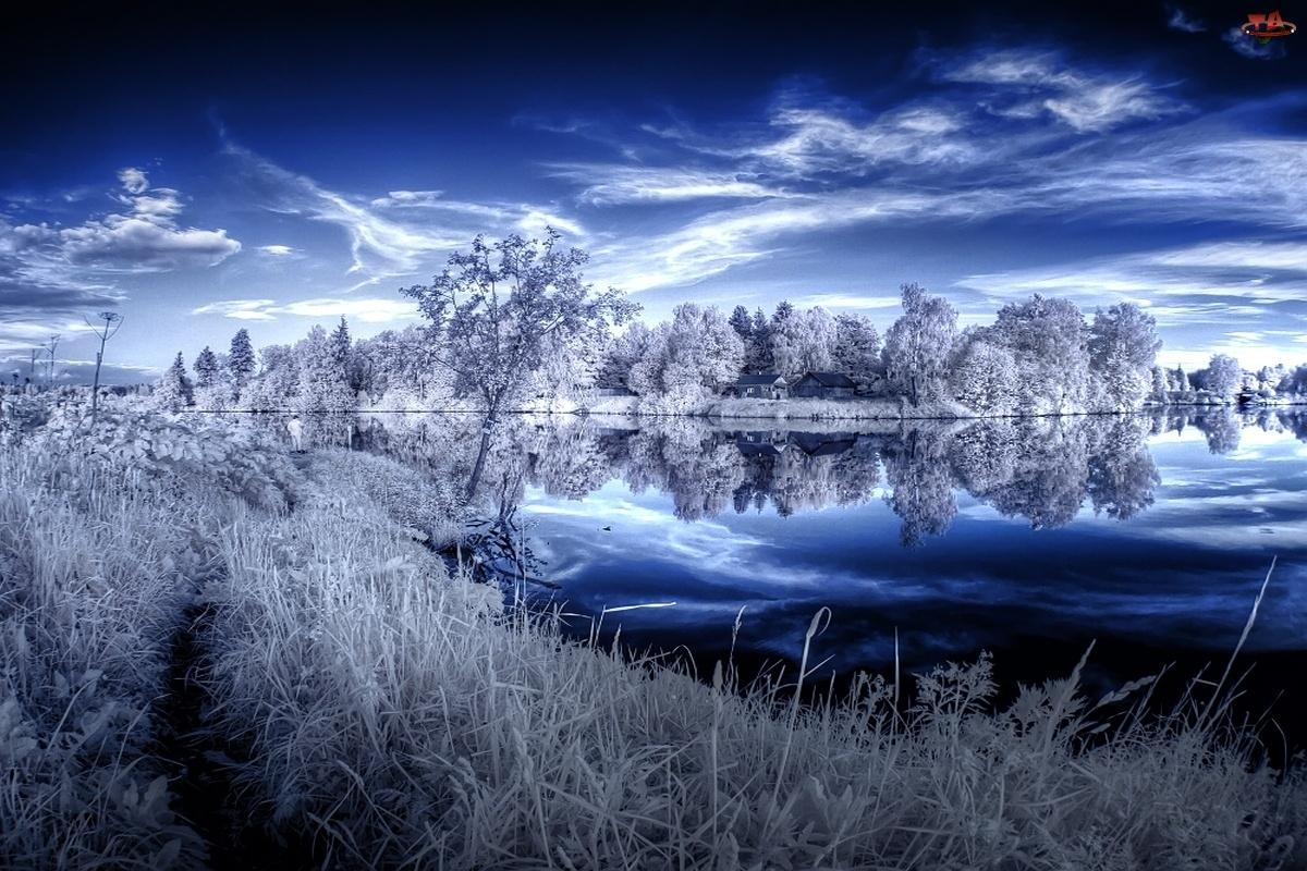 Trawy, Niebo, Drzewa, Oszronione, Jezioro