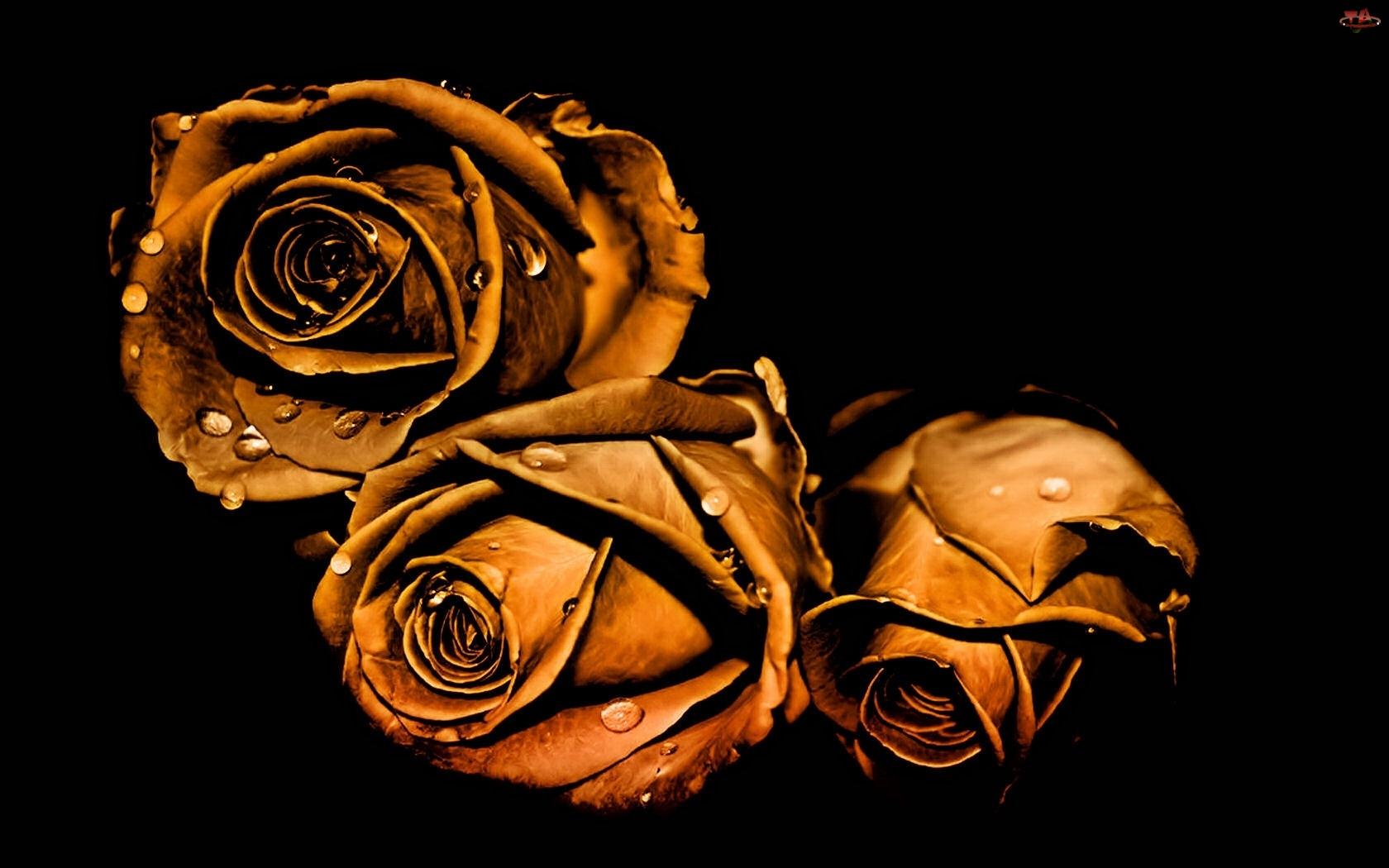 Wody, Róże, Krople