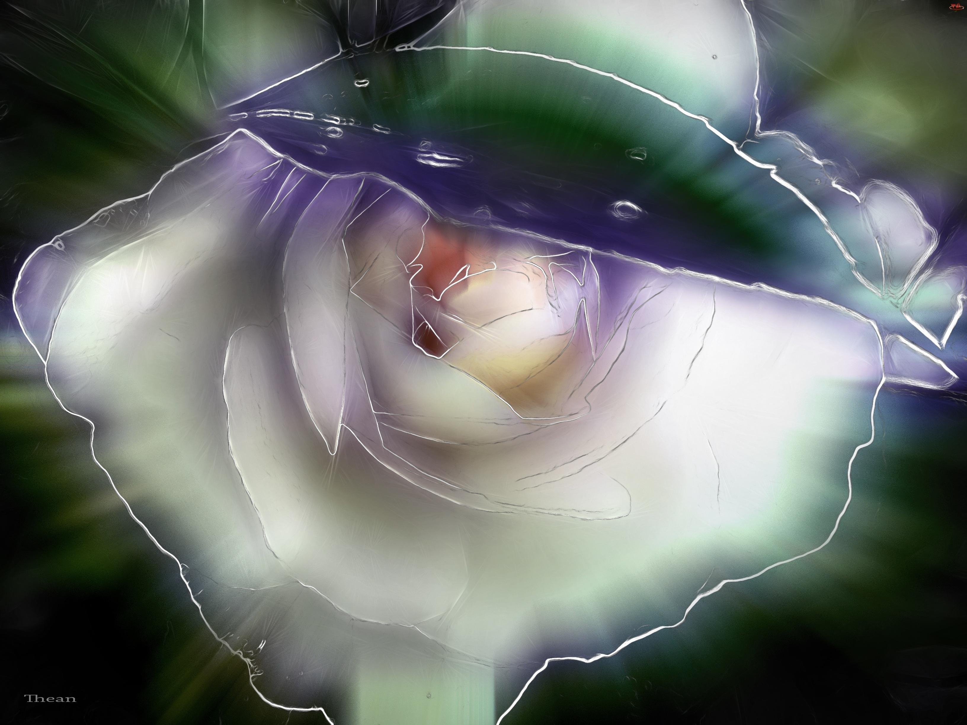 Róża, Fractalius