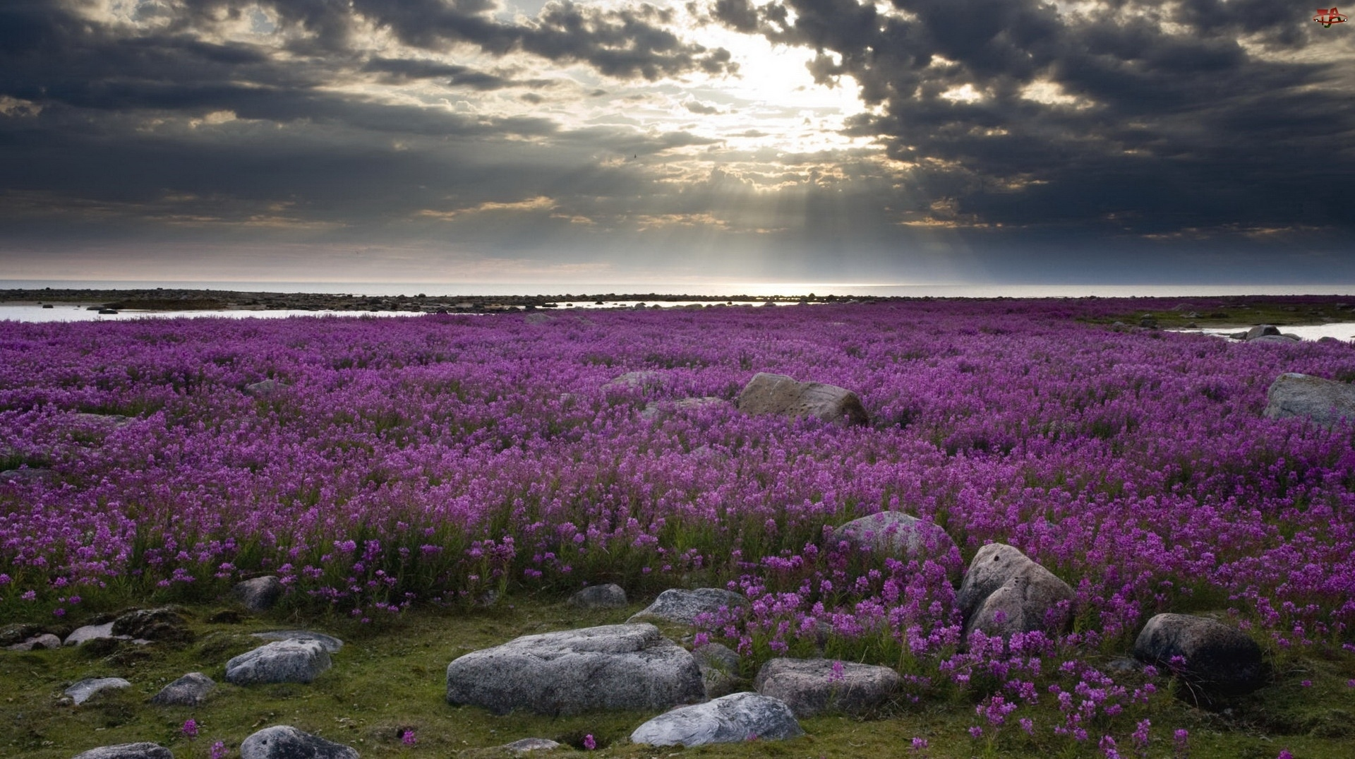 Chmury, Łąka, Kwiaty, Fioletowe, Ciemne
