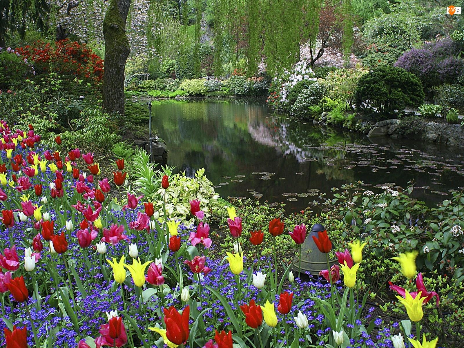 Rzeka, Krzewy, Drzewa, Kwiaty