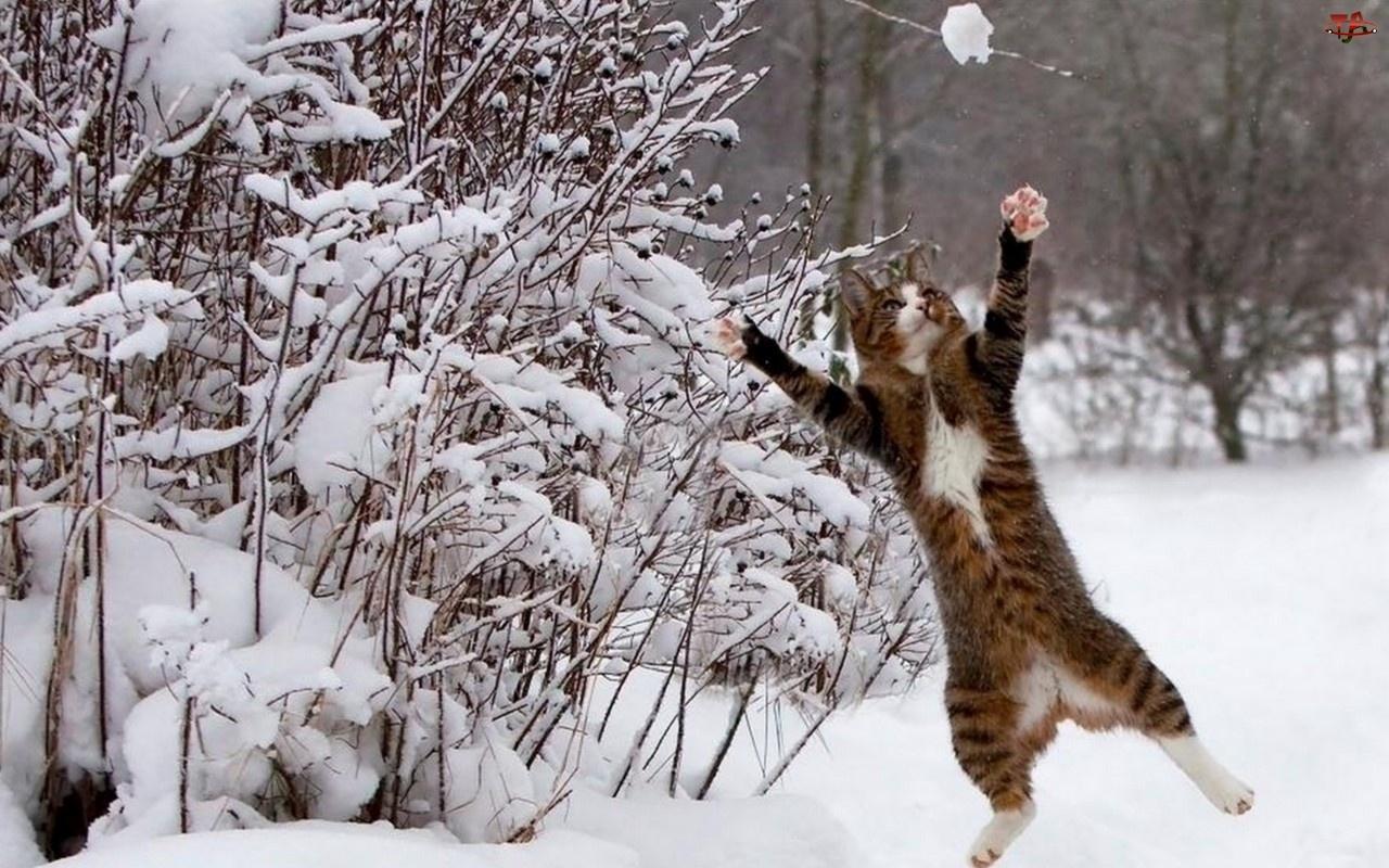 Zima, Kot, Śnieg, Skaczący