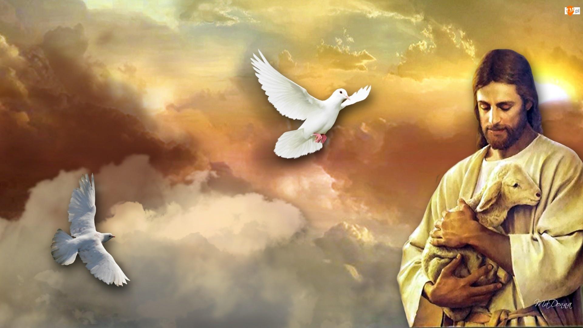 Gołębie, Jezus, Owieczka