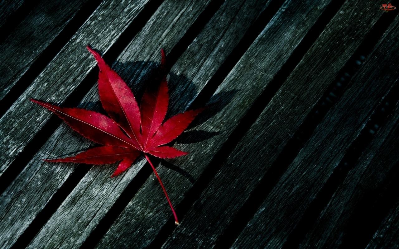 Drewno, Jesień, Przyroda, Liść, Natura