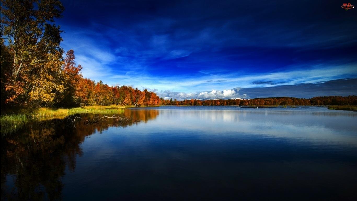 Brzegi, Norwegia, Porośnięte, Jezioro, Lasem