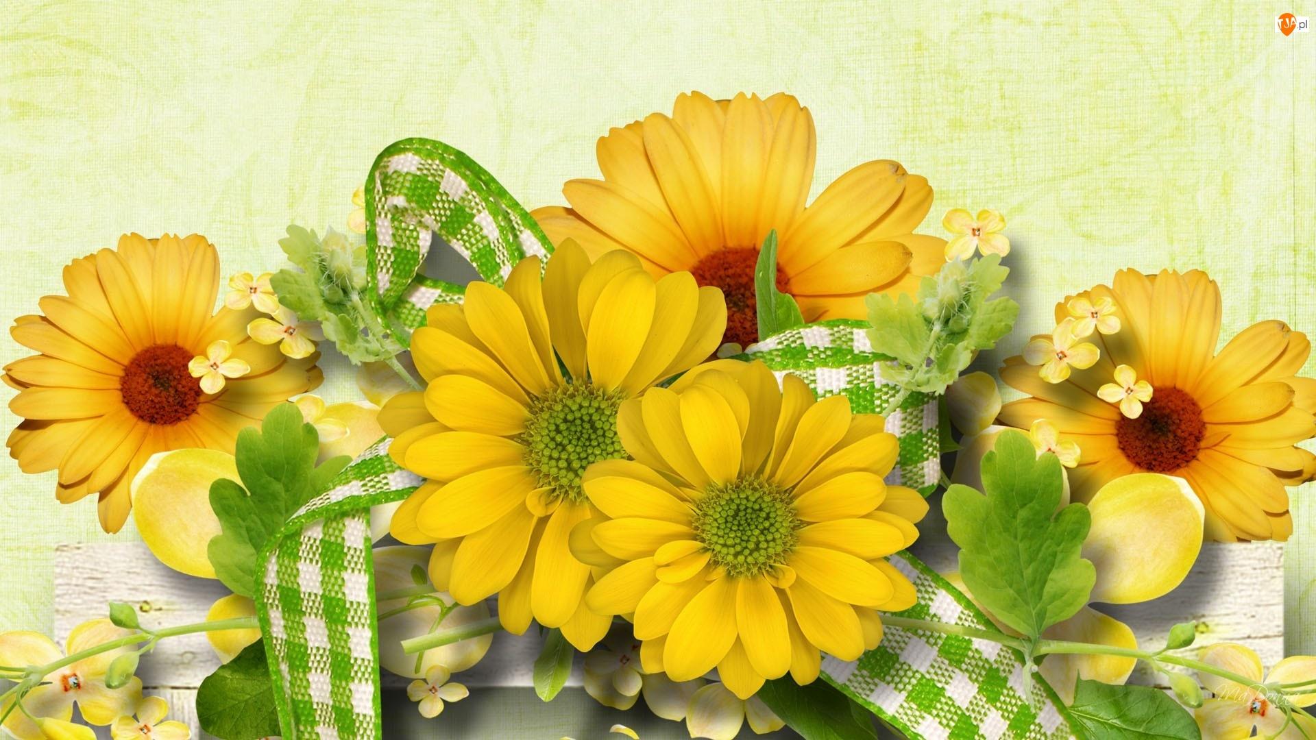 Wstążka, Żółte, Zielono, Margerytki, Biała