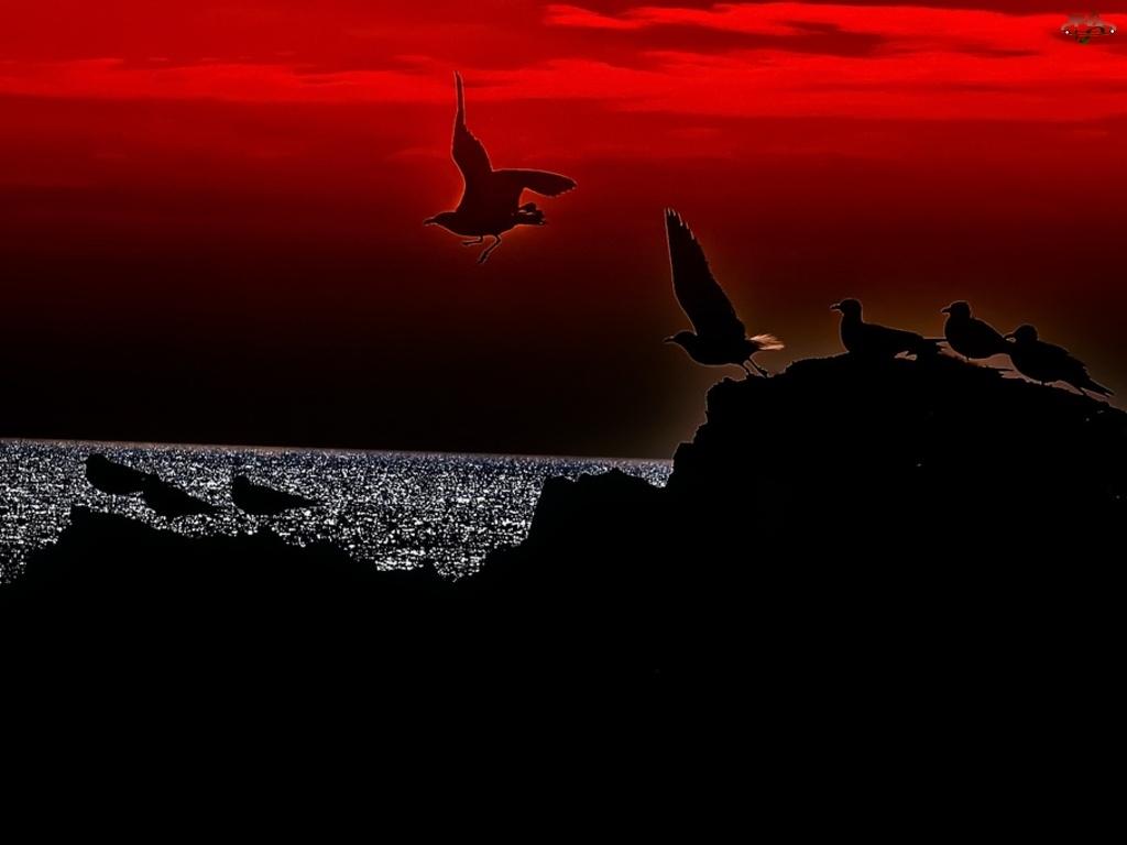 Morze, Ptaki