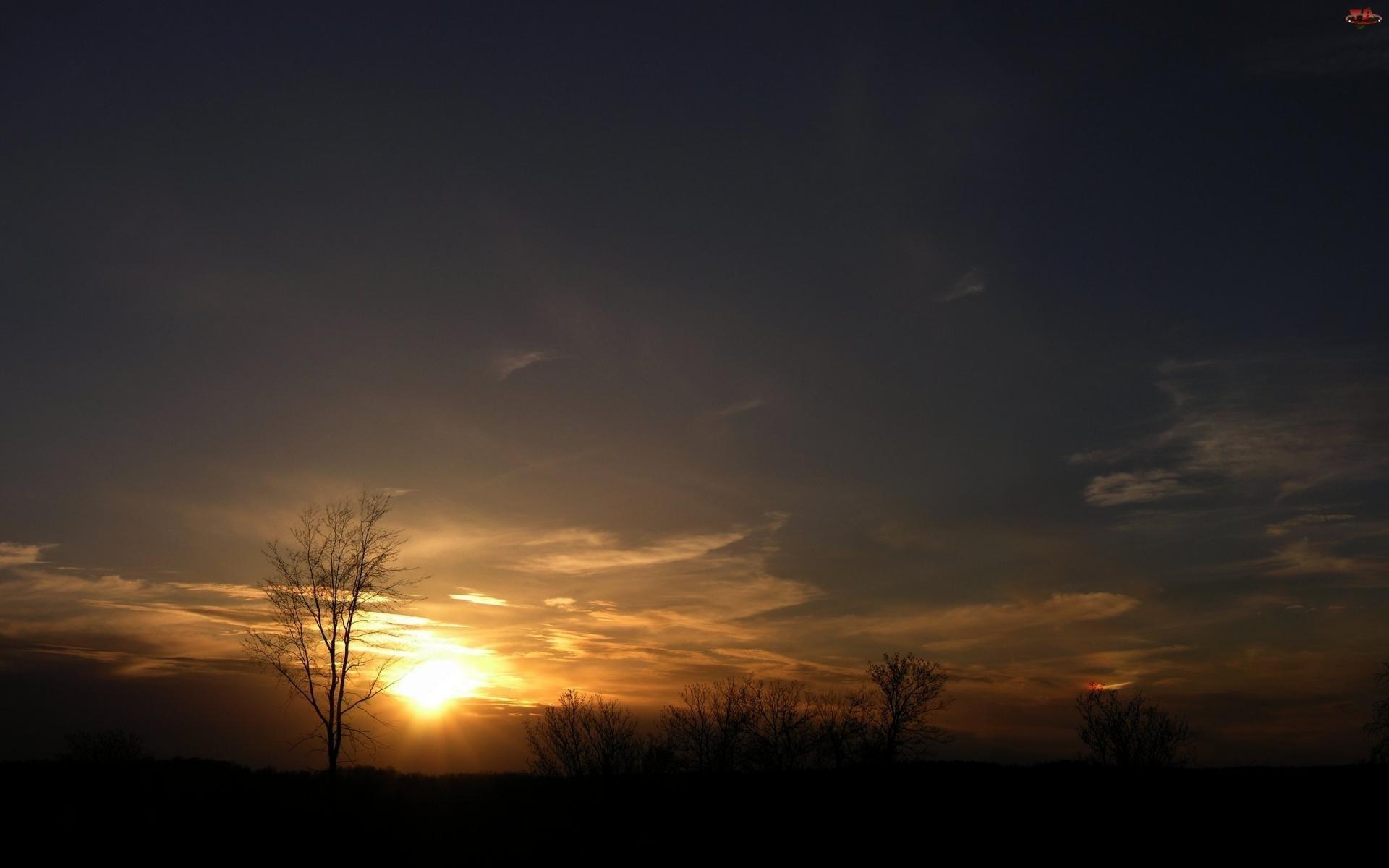 Drzewa, Zachód, Słońca