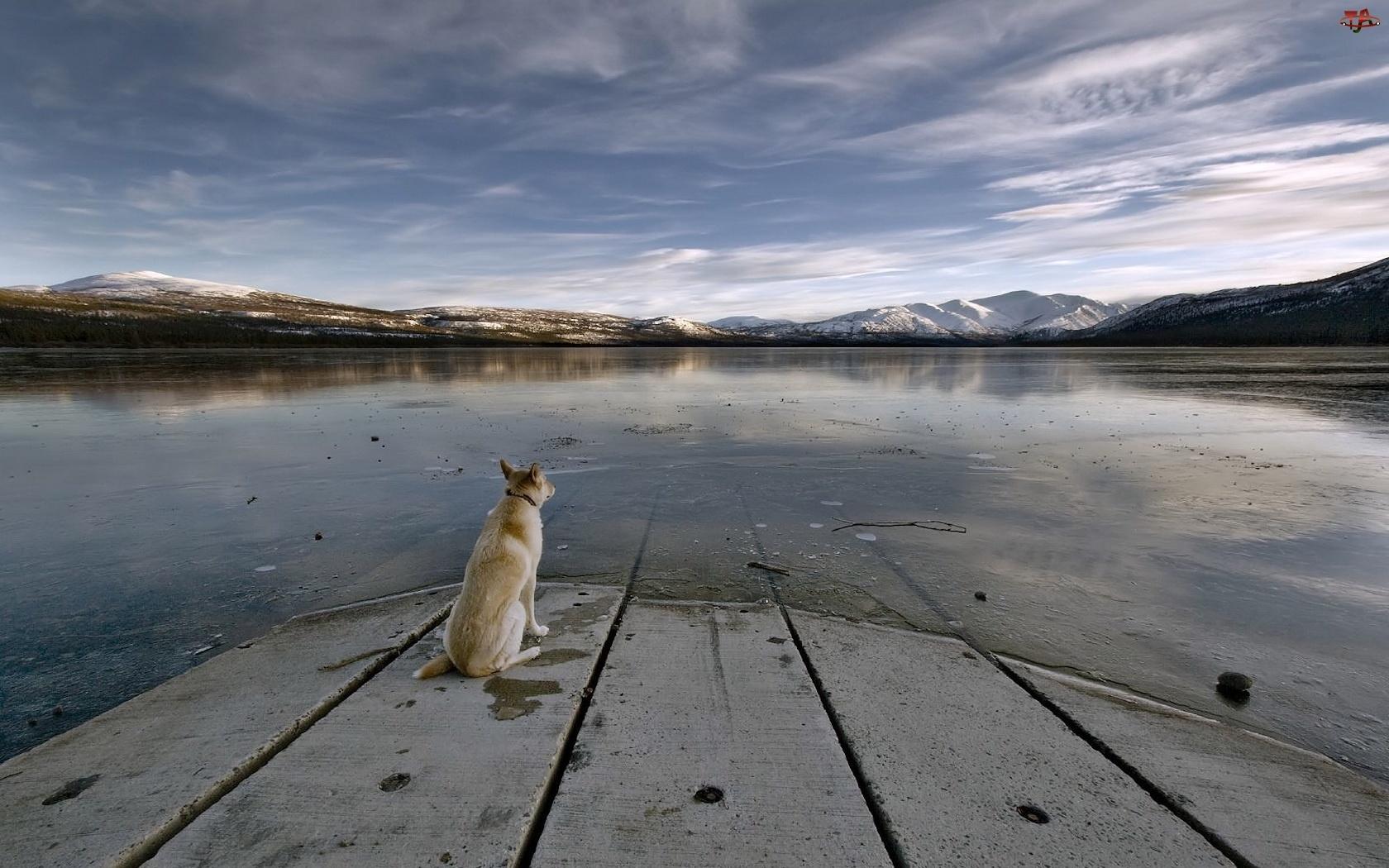 Pies, Oczekiwanie, Odbicie