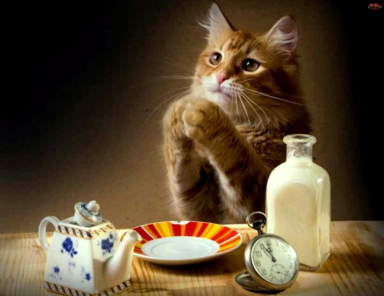 Modlący, Śniadanie, Się, Kot