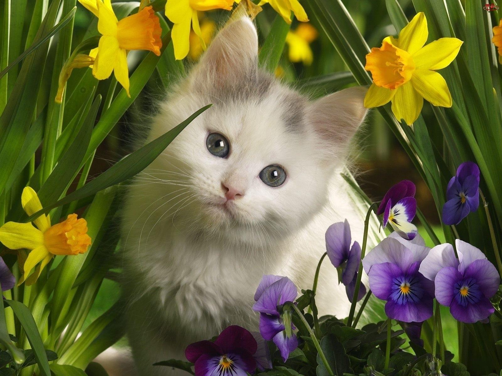 Kwiatki, Mały, Kotek